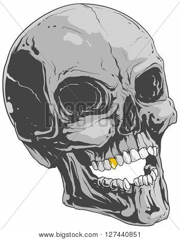 A vector illustration of human skull with gold tooth