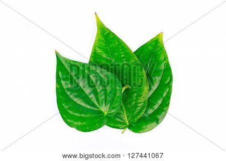 green betel leaf is herbal food nature
