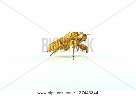 Molting insects on white background. close up