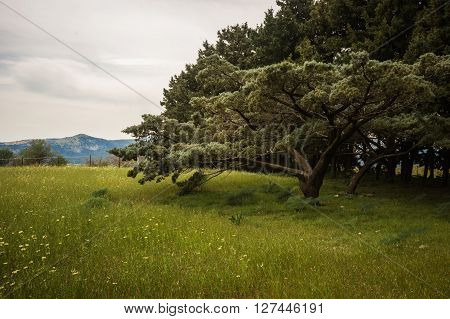 Scenic landscape with trees and fields at Mount Filerimos on Rodos island, Greece