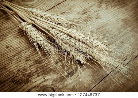 Sheaf of wheat on dark wooden background, sepia toned