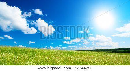 campo de margaridas e céu perfeito