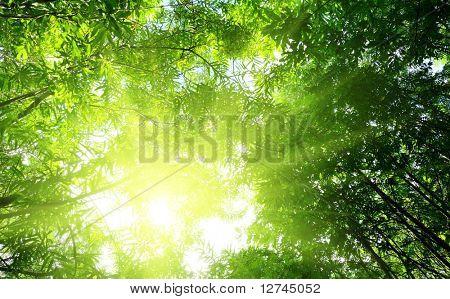 rayos del sol en el bosque profundo verano