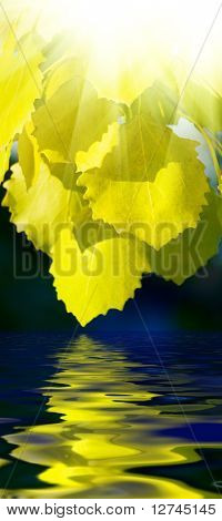 leaves of aspen and water