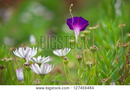 Summer grass and macro flower. Nature composition.