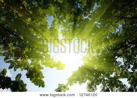 Strahlen der Sonne in deep forest