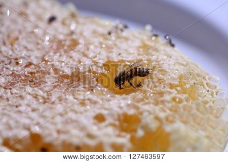 Close up view of a Wild Honey Bee Honey Comb filled with wild honey. Only bees make honey something that mankind has never been able to reproduce.
