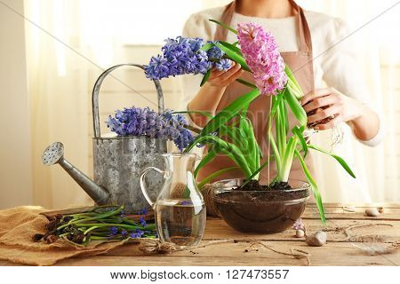 Woman planting hyacinths indoors
