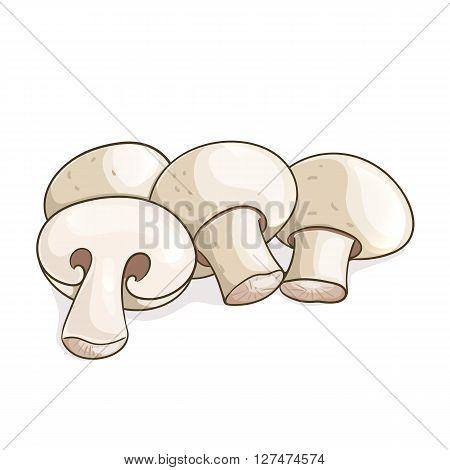White champignon mushrooms isolated on white. Vector illustration EPS10