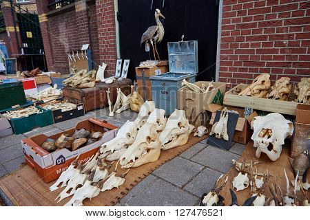AMSTERDAM, NETHERLANDS on APRIL 26, 2015. Flea market with animal skull during Queen's Day or King's day, Dutch annual national holiday, in Amsterdam, Holland