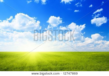 field of flax and blue sky