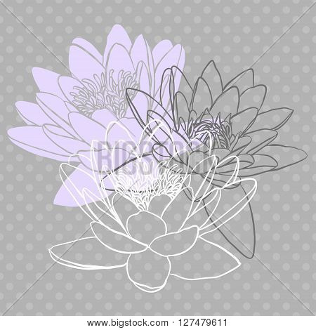 Decorative floral background with flowers of water lily