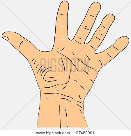 Open palm with fingers spread apart.  Realistic men's hand colored version