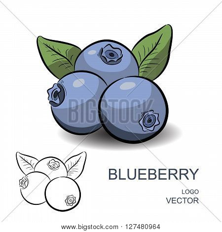 Blueberry with flowers and leaves isolated on white background. Colorful and contour. Logo vector illustration