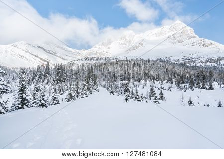 Winter mountain range panoramic and snow-covered forest