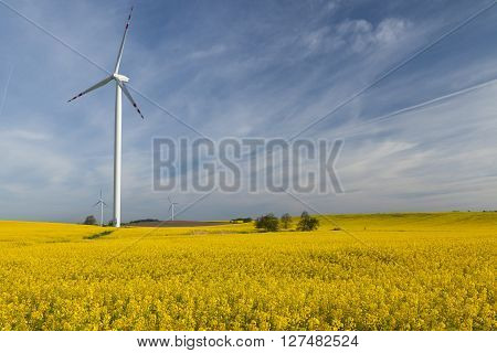 Wind turbines on a rape meadow (Poland)