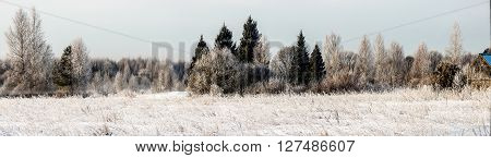 Panorama of a winter forest in the morning. The glade is covered with snow, and trees hoarfrost.