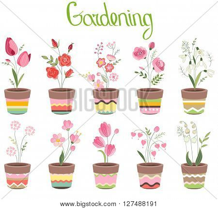 Cute striped flower pots isolated on white. Different flowers,