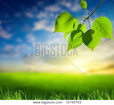 field of grass and leaves of poplar (shallow DOF)