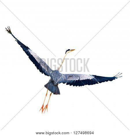 Start flight bird with wings wide open isolated on white background close-up