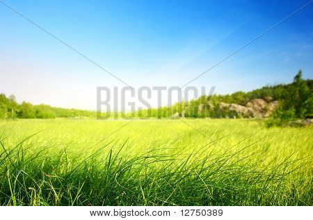 field of grass in north mountain (shallow DOF)