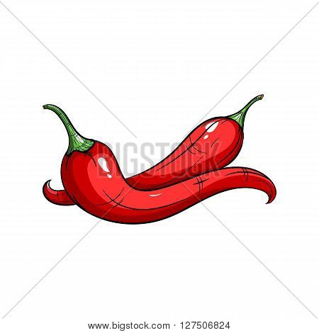 Vector chilli pepper illustration. Chilli pepper isolated on white background. Vector sketch hand drawn - stock vector