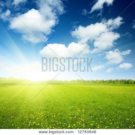 campo de flores de Primavera e céu perfeito
