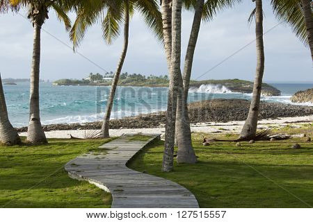 Wooden path and palm trees to Caribbean in Bahamas