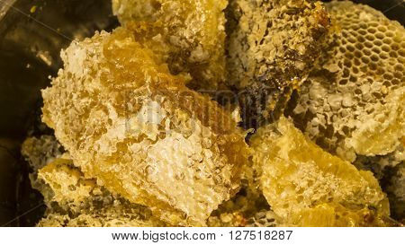 Close up sweet honey beehive Bee honey collected in the yellow honeycomb.