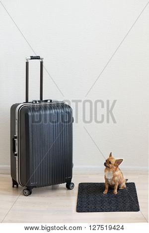 Large Luggage And Small Chihuahua Dog On Wooden Background.