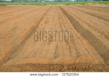 Plow the soil for garden of farmer paln