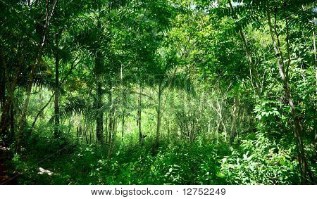 sunlight in jungle of Dominican