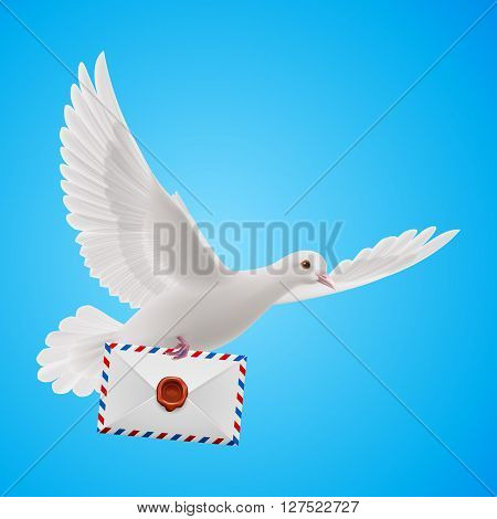 Pigeon fly with mail in blue sky