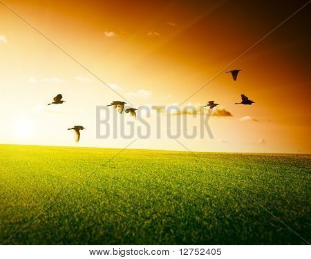 field of grass and flying birds