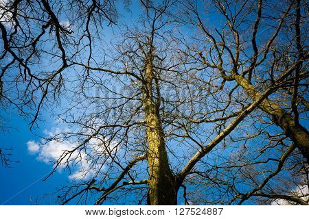 Branches of a tree without leaves on a background of blue sky