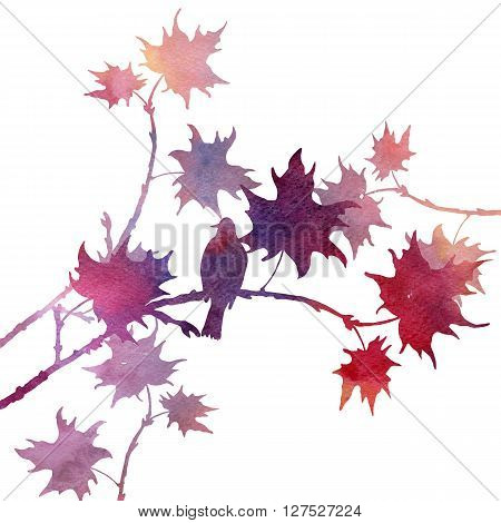 silhouette of bird at tree drawing in watercolor, hand drawn songbird at branch of maple tree, artistic illustration
