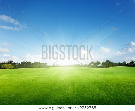 green field and trees