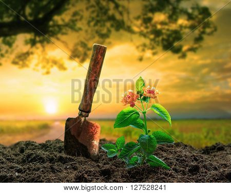 flowers plant and gardening tool against beautiful sunlight in green park use for people activities and growing tree in plantation field