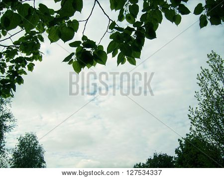 The sky with clouds framed in green leaves.