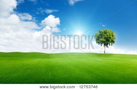 field of grass and tree