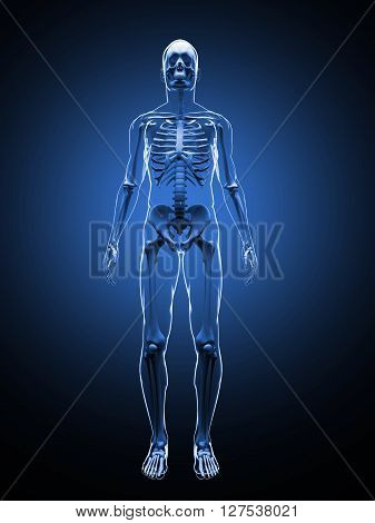 3D illustration of the human skeleton. Front view. Skeleton Template.