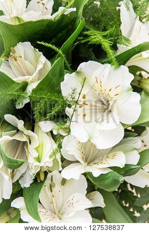 Detail photo of white hibiscus flower. Big petals and pistil. Festive bouquet; Beauty in nature.