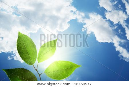 leaves and sunny sky