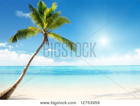 Mar Caribe y Palma de coco