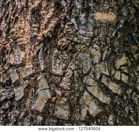 Bark pattern. The pattern of naturally occurring of trees species.