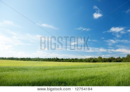 oat field and sunny sky