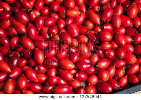 closeup photo of rosehip berries ready to be dried on a baking tray