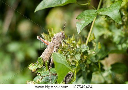 closeup photo of a grasshopper sitting on a green branch