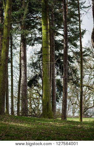 The Beginning Of Spring In The English Forest Or Park
