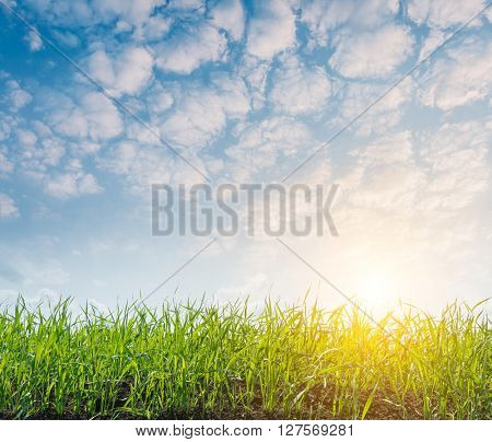 Fantastic view of the summer field and sunlight in blue sky. Picturesque and gorgeous scene. Location place Ukraine, Europe. Artistic picture. Beauty world.
